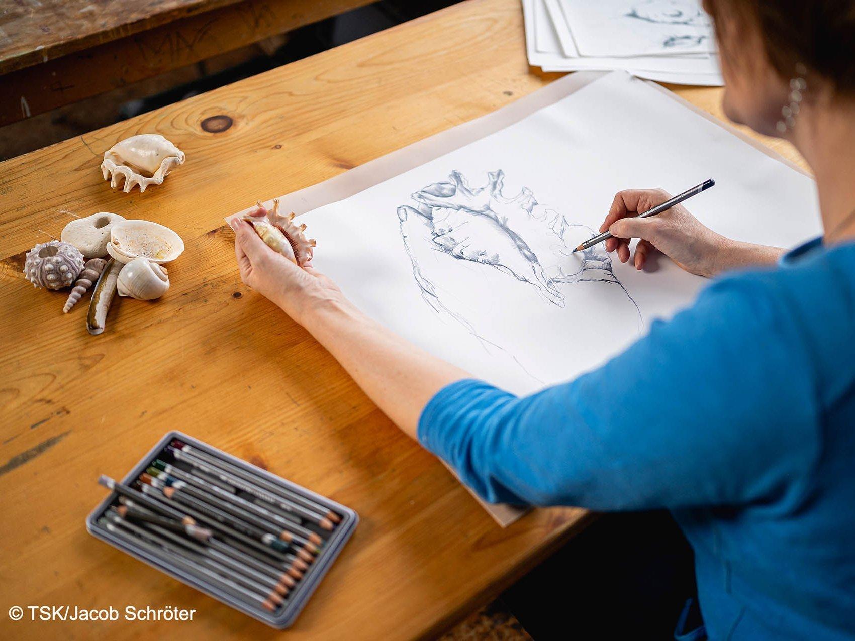 Die Künstlerin Nina Lundström zeichnet eine Muschel ab